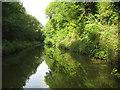 SP2069 : Grand Union Canal: Reach in Rowington by Nigel Cox