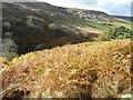 NZ6502 : Bracken-covered east side of the Esk valley by Christine Johnstone
