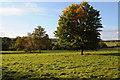 SO4003 : Farmland near Cefntilla Court by Philip Halling