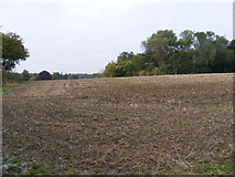 TM3863 : Looking towards the B1121 Main Road & Rookery Wood by Geographer
