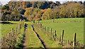 J2865 : Track, Lambeg/Hilden by Albert Bridge