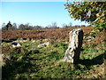 ST4393 : Stone Circle and Standing Stone on Gray Hill by Jeremy Bolwell