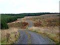 NY7474 : Switchback road in Wark Forest by Oliver Dixon
