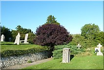 SY5697 : SS Andrew & Peter, Toller Porcorum: churchyard (6) by Basher Eyre