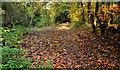 J3671 : Path, Cregagh Glen, Belfast (1) by Albert Bridge
