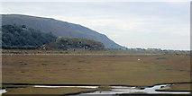 SH6214 : Marshes near Morfa Mawddach station by John Firth