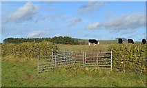 SK1160 : Pastures above Bridge End Farm by Neil Theasby