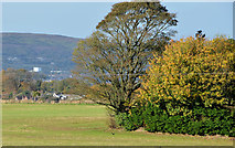 J3267 : Field and trees, the Giant's Ring, Belfast by Albert Bridge