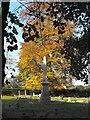 SP0495 : Obelisk in Churchyard of St Margaret, Chapel Lane, Great Barr by Penny Mayes