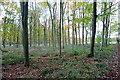 SP3722 : In Laurel Wood by Graham Horn