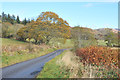 NM9635 : Minor road near Ardchattan Priory by Steven Brown