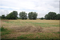 TQ9293 : Farmland in Paglesham by N Chadwick