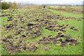 SO6317 : Wild boar activity by Philip Halling