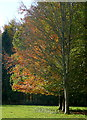 SP3820 : In Little Park by Graham Horn