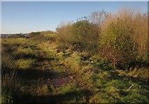 SX9066 : Path on former Barton tip by Derek Harper