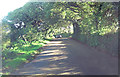 SW6926 : Unnamed lane east of Trevilgan Farm by Stuart Logan