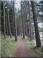 NT2840 : Path through the pines, Falla Brae by Jim Barton