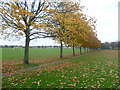 TQ3163 : Purley Way Playing Fields by Marathon