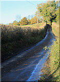 ST6838 : 2012 : Holly Hill between Batcombe and Westcombe by Maurice Pullin