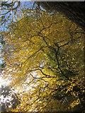 SX9065 : Leaves, Chapel Hill Pleasure Grounds by Derek Harper