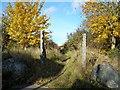 SK5760 : Wot, no oak trees? by Antony Dixon