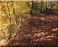 SX7267 : Path, Hembury Woods by Derek Harper