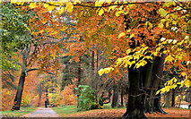 J3472 : Autumn path, Ormeau Park, Belfast (2012-1) by Albert Bridge