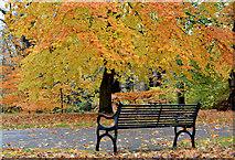 J3472 : Seat, Ormeau Park, Belfast (2) by Albert Bridge
