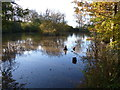 TQ4034 : Pond in the trees by Dave Spicer