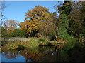 TQ0558 : River Wey Navigation by Alan Hunt