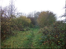NZ3319 : Bridleway at Petty's Nook by JThomas