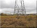 TQ5579 : Pylons on the marsh by Roger Jones