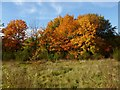 NS3978 : Autumn colours in the industrial estate by Lairich Rig