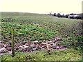 H4764 : Muddy field, Mullaghmore by Kenneth  Allen
