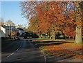 TL4748 : Whittlesford: autumn leaves by John Sutton