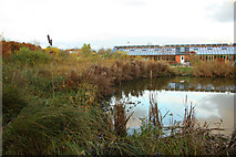 SK7156 : Reed bed by Richard Croft
