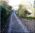 SO5801 : Narrow hedged lane from Woolaston Common to Barnage Farm by Jaggery