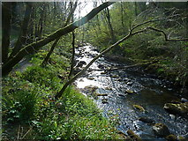 NX4858 : Looking west along Balloch Burn by Anthony O'Neil