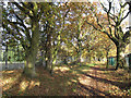TQ4474 : Woodland corridor by Stephen Craven