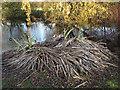 TQ4375 : Moorhen nest by Stephen Craven
