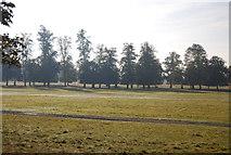 TQ1668 : Hampton Court Park by N Chadwick
