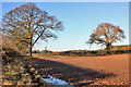 SE9745 : Farmland east of South Dalton by Peter Church