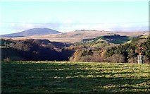 NU0122 : Parkland above valley of Lilburn Burn by Andrew Curtis