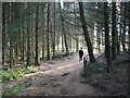 NO0100 : Lendrick Muir forest by Callum Black