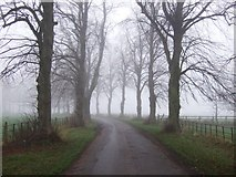 NZ3411 : Lane towards Low Dinsdale by JThomas