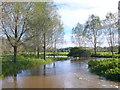 ST9103 : River Stour by Nigel Mykura