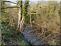 SJ9490 : River Goyt by David Dixon