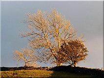 SD5299 : Winter sunshine on trees, Garnett Bridge by Karl and Ali