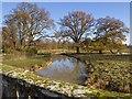 SP2556 : River Dene in Charlecote Park by David P Howard