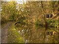 SJ9590 : Peak Forest Canal, River Wood by David Dixon